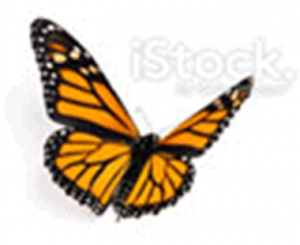 butterfly-large
