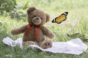 teddy bear picnic sitting on fabric in the garden with Leopard Lacewing butterfly  flying.
